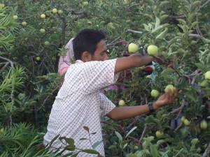 wisata di kota batu malang - petik apel